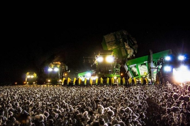 It looks like a concert with a crowd of people, but it's a cotton harvest.
